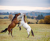 HOR 01 MB0228 01