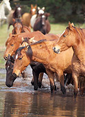 HOR 01 MB0230 01
