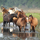 HOR 01 MB0231 01