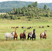 HOR 01 MB0233 01