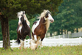 HOR 01 MB0237 01