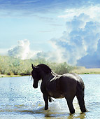 HOR 01 MB0239 01