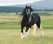 HOR 01 MB0253 01