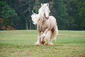 HOR 01 MB0254 01