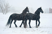 HOR 01 MB0256 01