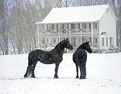HOR 01 MB0257 01