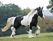 HOR 01 MB0262 01