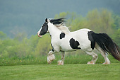 HOR 01 MB0263 01