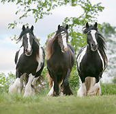 HOR 01 MB0264 01