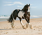 HOR 01 MB0269 01