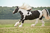 HOR 01 MB0270 01