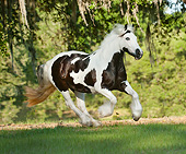 HOR 01 MB0271 01