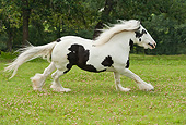 HOR 01 MB0272 01