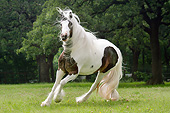 HOR 01 MB0273 01