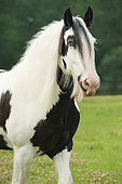 HOR 01 MB0274 01