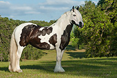 HOR 01 MB0275 01
