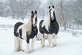 HOR 01 MB0276 01
