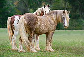 HOR 01 MB0280 01
