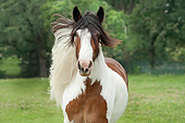 HOR 01 MB0282 01