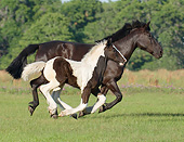 HOR 01 MB0284 01