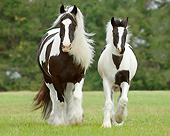 HOR 01 MB0285 01