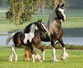 HOR 01 MB0286 01