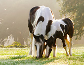 HOR 01 MB0287 01