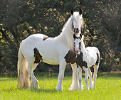 HOR 01 MB0289 01