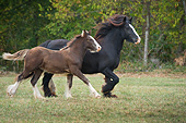 HOR 01 MB0293 01