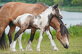 HOR 01 MB0294 01