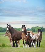HOR 01 MB0296 01