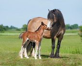 HOR 01 MB0297 01
