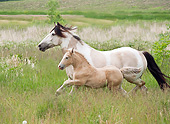 HOR 01 MB0298 01