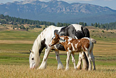 HOR 01 MB0300 01