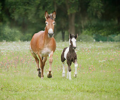 HOR 01 MB0303 01