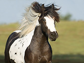 HOR 01 MB0305 01