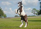 HOR 01 MB0306 01