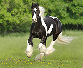 HOR 01 MB0307 01