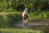 HOR 01 MB0312 01