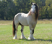HOR 01 MB0315 01