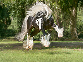 HOR 01 MB0319 01