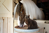 HOR 01 MB0320 01