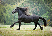 HOR 01 MB0323 01