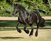 HOR 01 MB0324 01