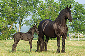 HOR 01 MB0325 01