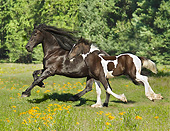 HOR 01 MB0327 01