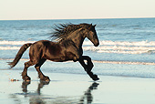 HOR 01 MB0328 01