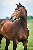 HOR 01 MB0334 01