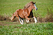 HOR 01 MB0336 01