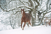 HOR 01 MB0340 01
